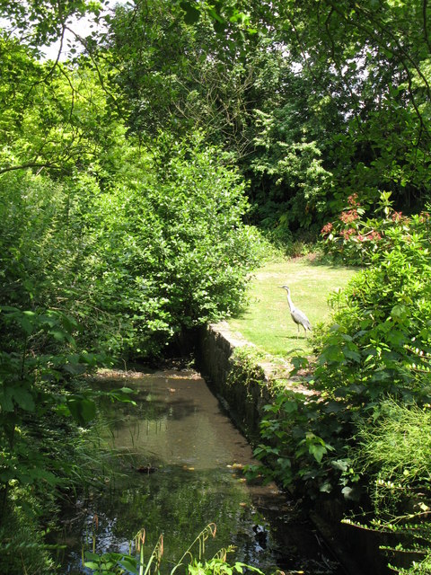 The Beck (and heron) at the northern end of Kelsey Park