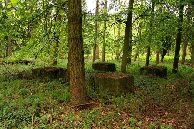 Concrete blocks in the woods