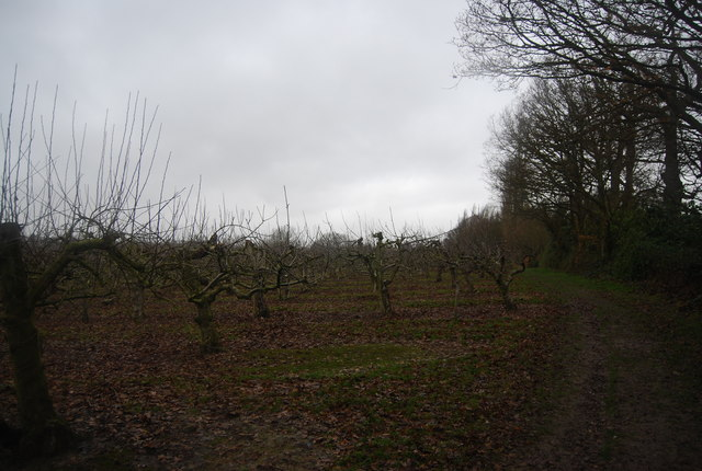 Orchards on the edge of Brenchley