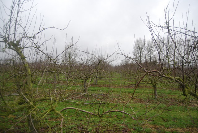 Orchards near  Brenchley Manor