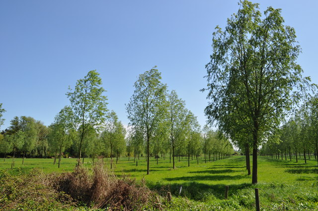 Woodland at Chappel