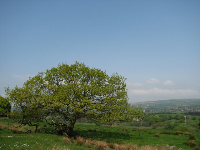 View of tree on Witton Weavers Way