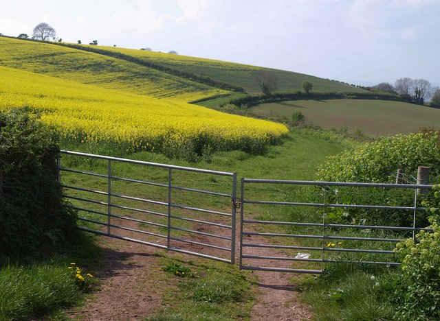 Rapeseed by Deane Lane
