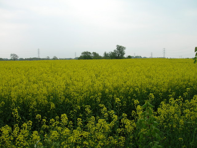 Crop field off Bad Bargain Lane