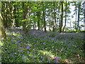 SJ8772 : Gravelhole Wood by Peter Turner