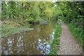 SU0394 : River Thames at Ashton Keynes by Philip Halling