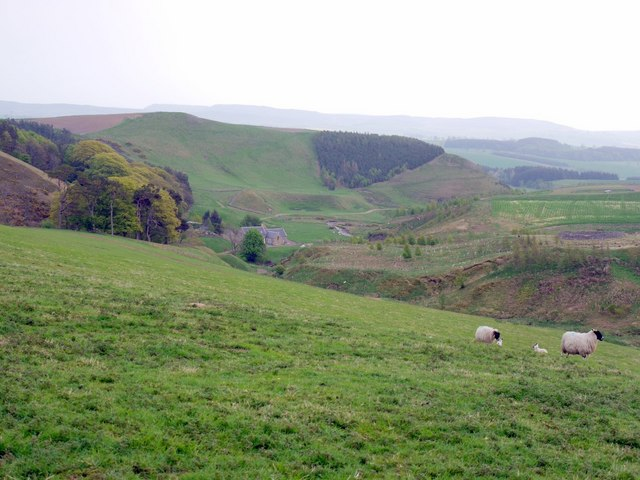 Sheep pasture above Hazeltonrig