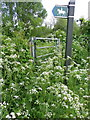 SU0725 : Cow parsley (Anthriscus sylvestris), Harvest Lane by Miss Steel