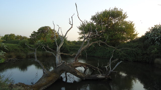 Old tree and pond nr Semer Gate Farm (A1141)