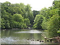 TQ3768 : The lake in Kelsey Park (7) by Mike Quinn