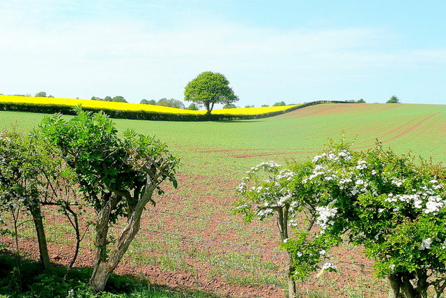 Arable scene near Bromsash