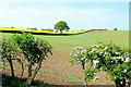 SO6523 : Arable scene near Bromsash by Jonathan Billinger