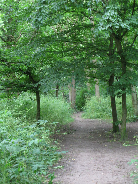 Path in the wood south of Stone Park  Avenue, BR3
