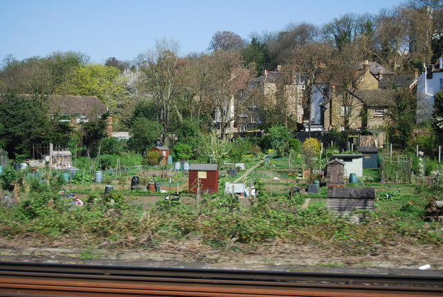 Allotments by the railway, Bromley