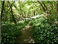 SJ6102 : Footpath through Whitwell Coppice by Richard Law