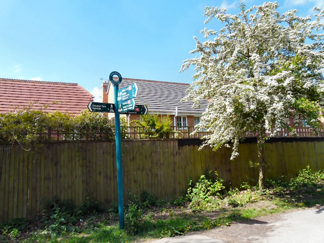 Path junction by Tannery Way