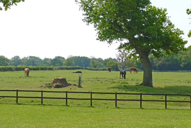 Paddock near Haywards Farm