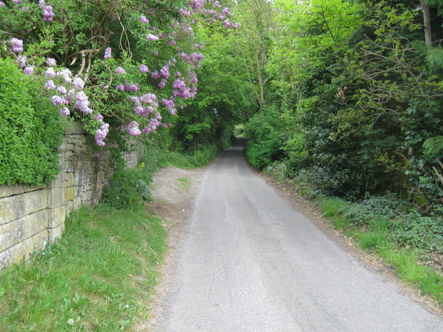 Bent Lane, Darley Hillside