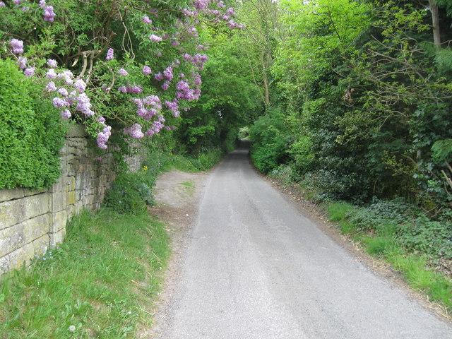 Bent Lane, Darley Hillside