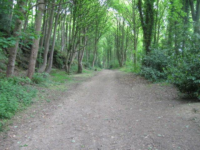 Woodland track, Darley Hillside