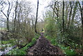 TQ0232 : A muddy stretch of the Wey South Path by Nigel Chadwick