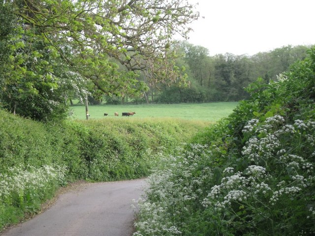 Meadow and woodland, Preston Bagot