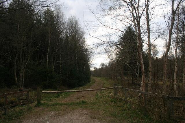 Funach Wood Track