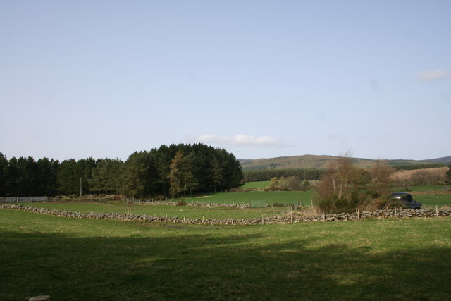 Field by Bush Croft