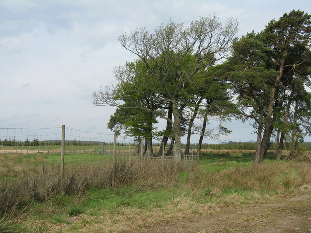 Deer fence and shelterbelt trees
