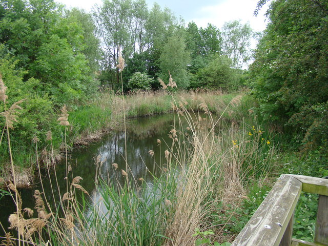 Pond alongside the Bow Creek Ecology Park path #3