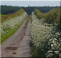 SK5379 : Whitwell Road towards Whitwell Wood by Andrew Hill