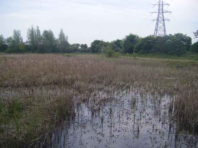 Lakeside carp pond