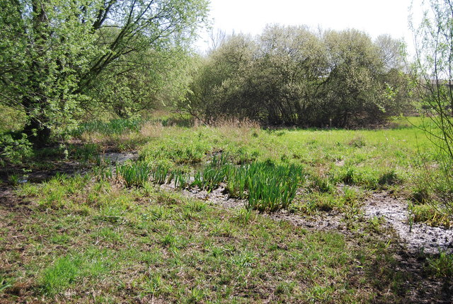 Marshy Area  South Norwood Country Park  U00a9 N Chadwick