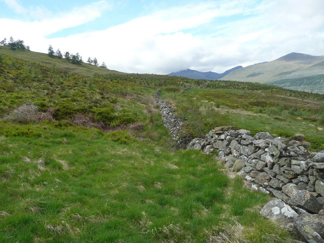 A dry stone wall soon to disappear into a forest