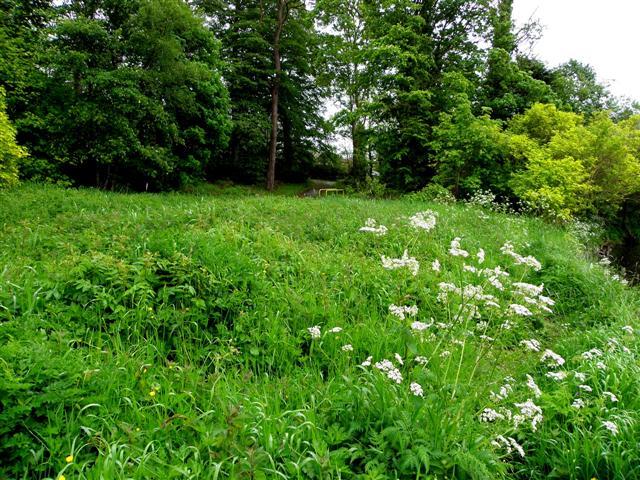 Grassland, Cranny