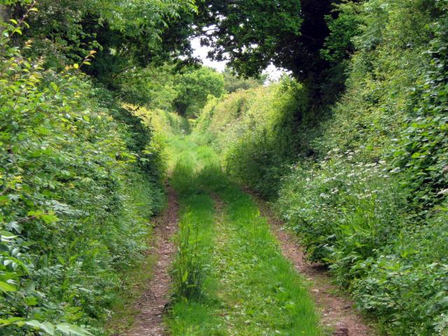 Farm track, Edgeborough Farm