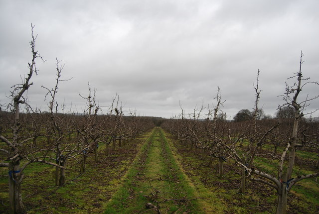 Orchard, Moat Farm
