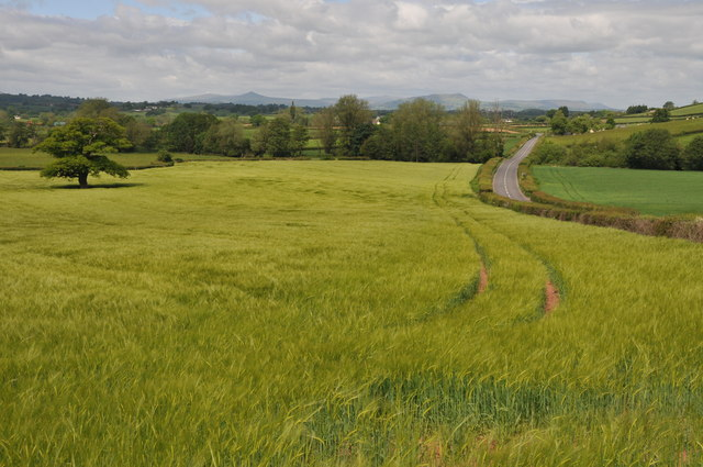 Barley field and road to Llandenny