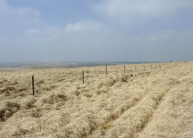 Moorland above Cwm Doethie Fach, Ceredigion