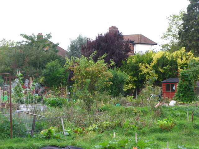 Eltham Palace Allotments