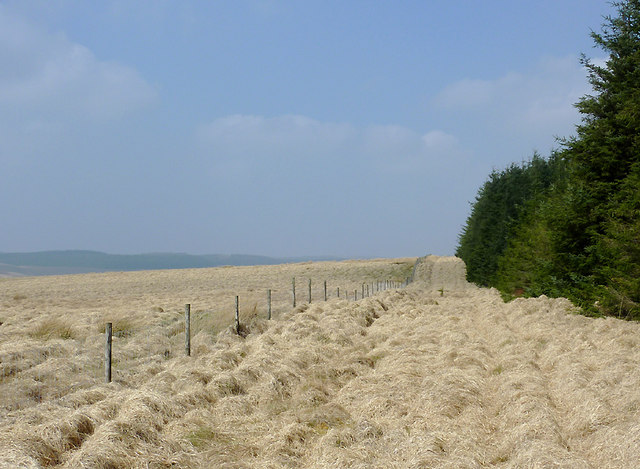 Moorland and forest north-west of Soar-y-Mynydd, Ceredigion
