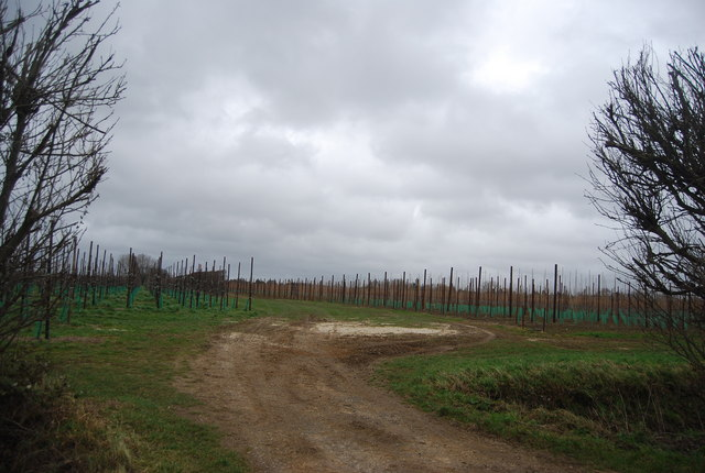 New orchard, Moat Farm