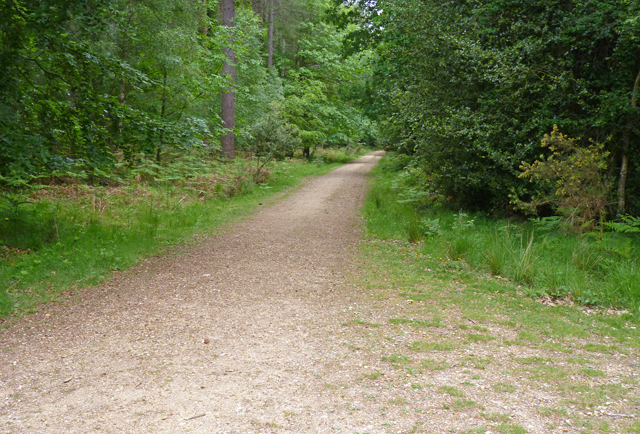 Path through Norley Inclosure