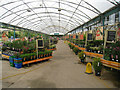 TL3946 : Inside Royston Garden Centre by Given Up