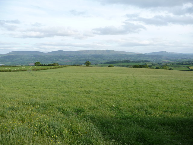 Field below the common land of The Begwns