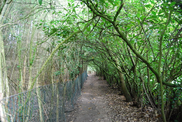 Tunnel of trees, High Weald Landscape Trail