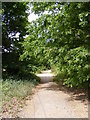 TM2545 : Footpath to Felixstowe Road by Adrian Cable