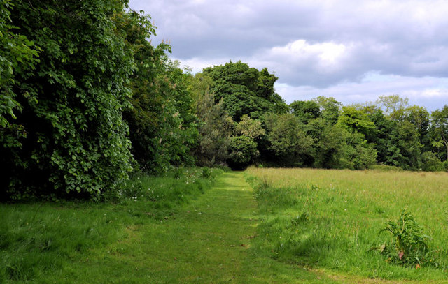 Field and trees, Crawfordsburn Country Park (4)