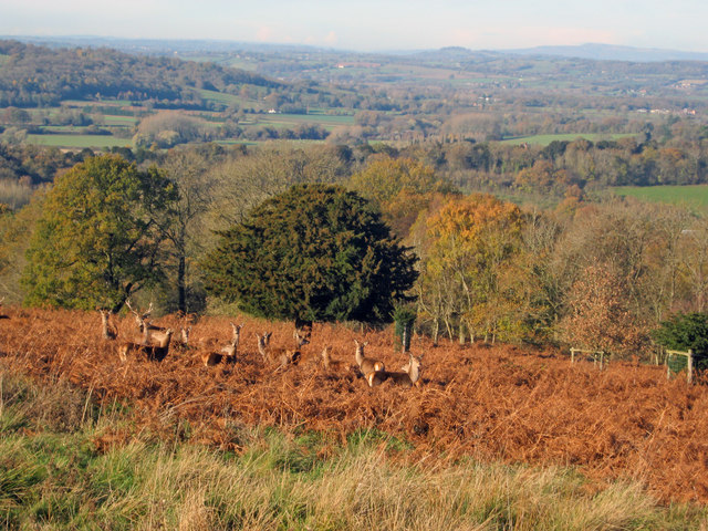 Red Deer in Eastnor Park