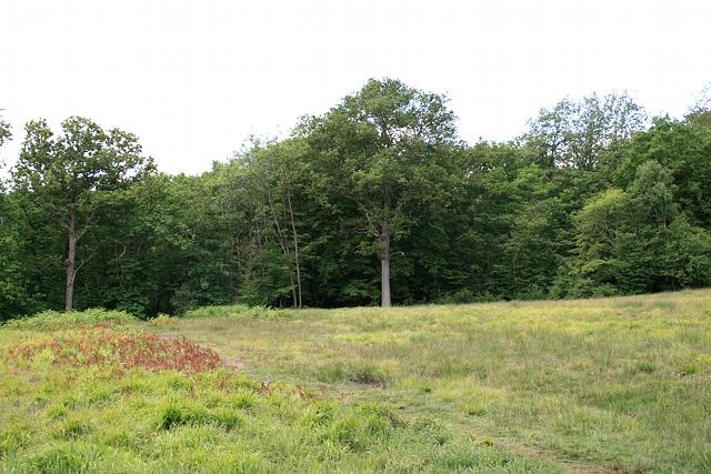 Heathland on Horns Hill